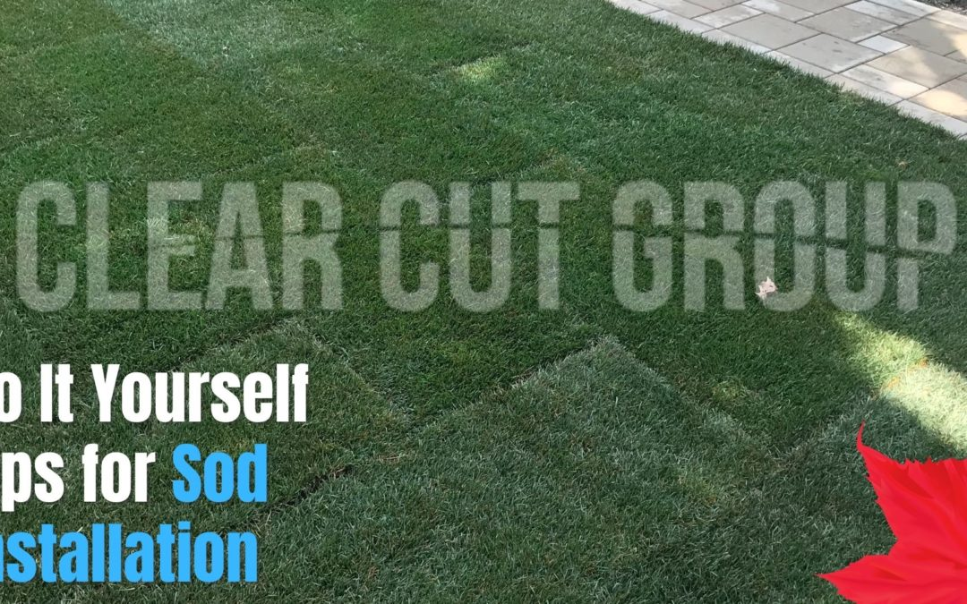 Do It Yourself Tips for Sod Installation