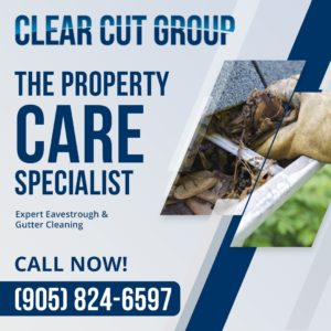 professional gutter cleaning service